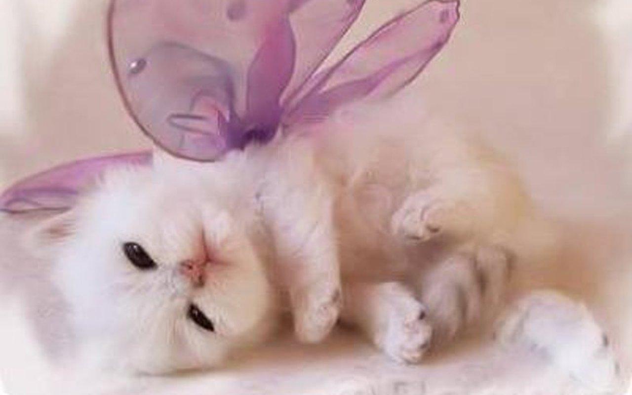 http://3.bp.blogspot.com/-ZyiypBrF5qc/UHLnxfb7WZI/AAAAAAAABZY/Llj4c9pgFbQ/s1600/Cute-Kitten-Wallpaper-kittens-16094693-1280-800.jpg