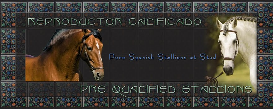 PRE Qualified Stallions