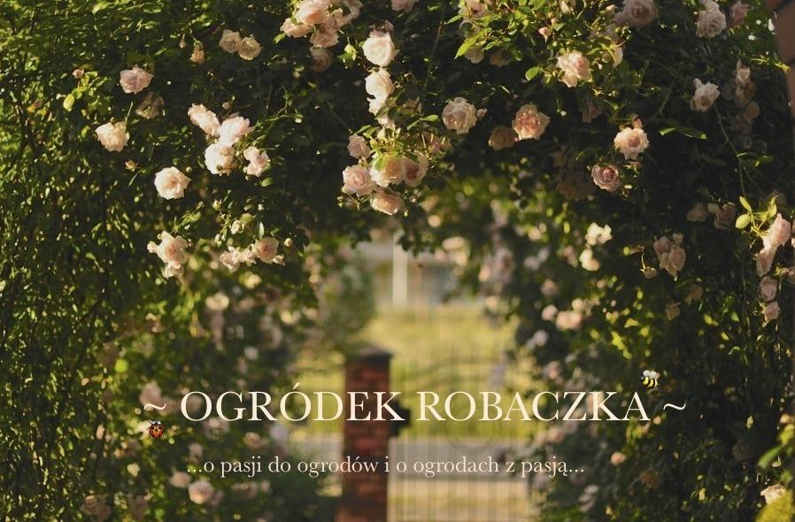 Ogródek Robaczka