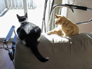 Two cats in sunshine