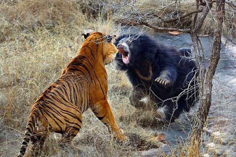 http://funkidos.com/pictures-world/wild-life/12-most-impressive-fighting-animals