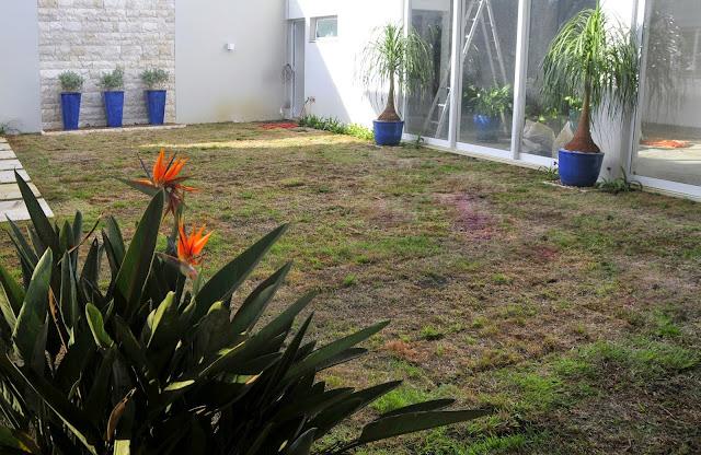 grama esmeralda, jardim antes e depois, strelitzia, vaso vietnamita
