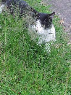 Image: Mr Bumpy hiding behind long grass