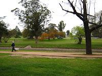 Paisaje arboles en un parque perro