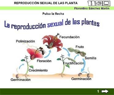 Hierbas y condimentos que incrementan la testosterona