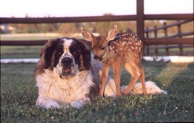 Hình ảnh cảm động về động vật