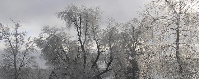 Winter, photograph, cold, ice, trees, plants, Sarah Myers, S. Myers, chill, gray, silver, willow, clouds, storm, art, artist
