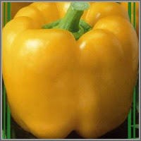 Сладкий перец сорт «Индало»