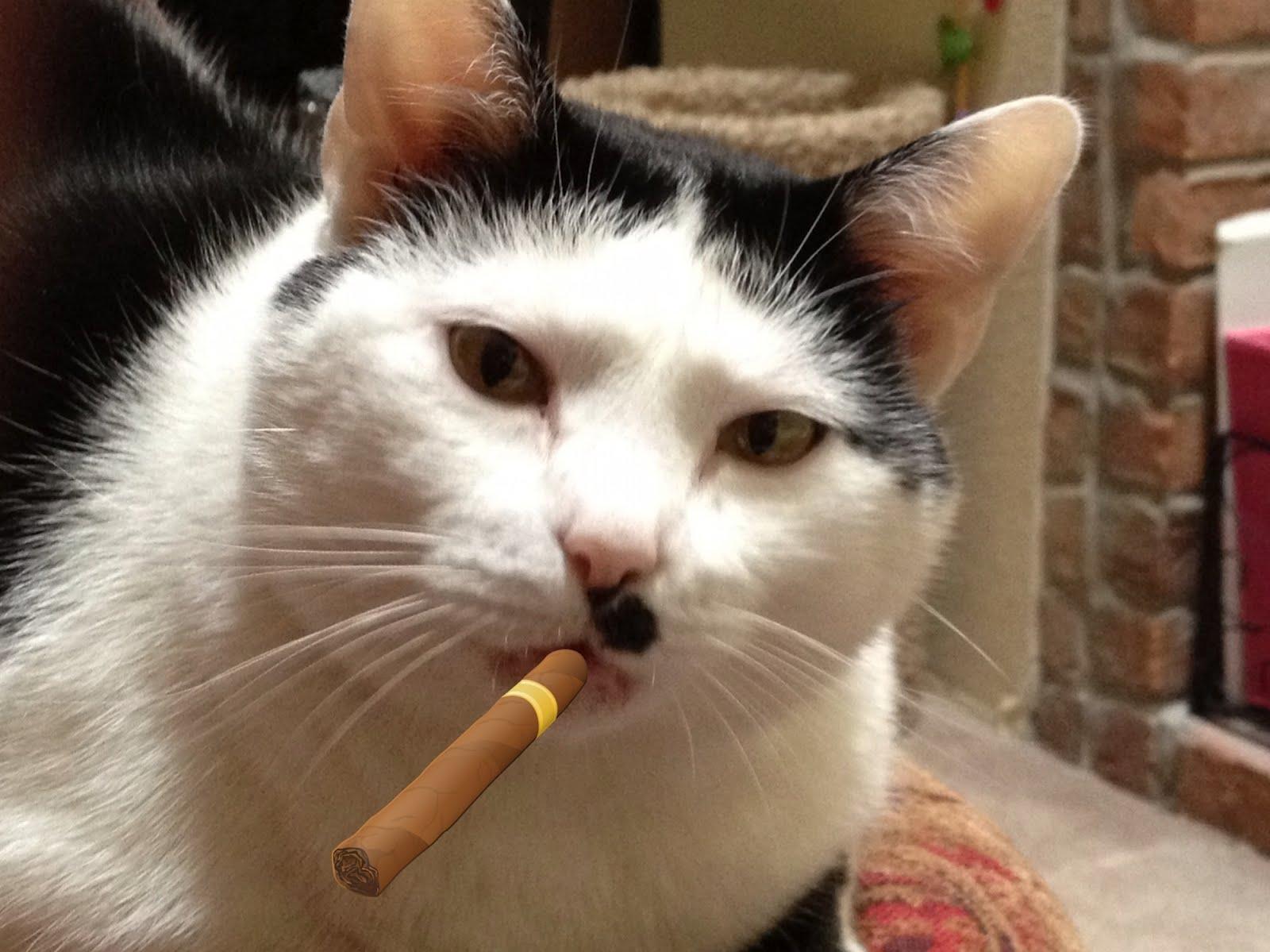 Cat  Q A