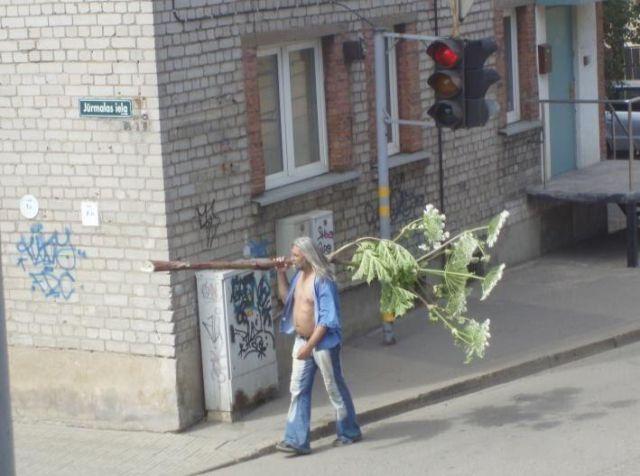 Homem carregando árvore