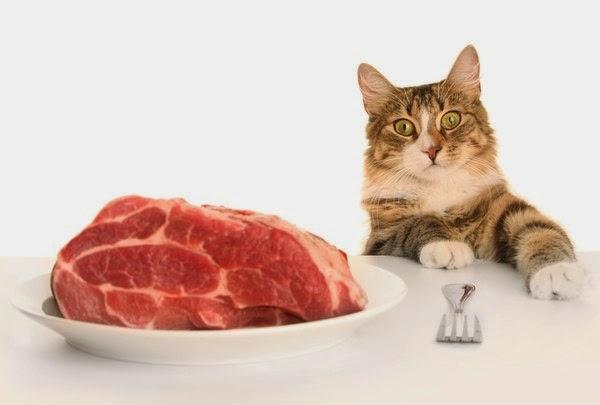 Натуральное питание для котов