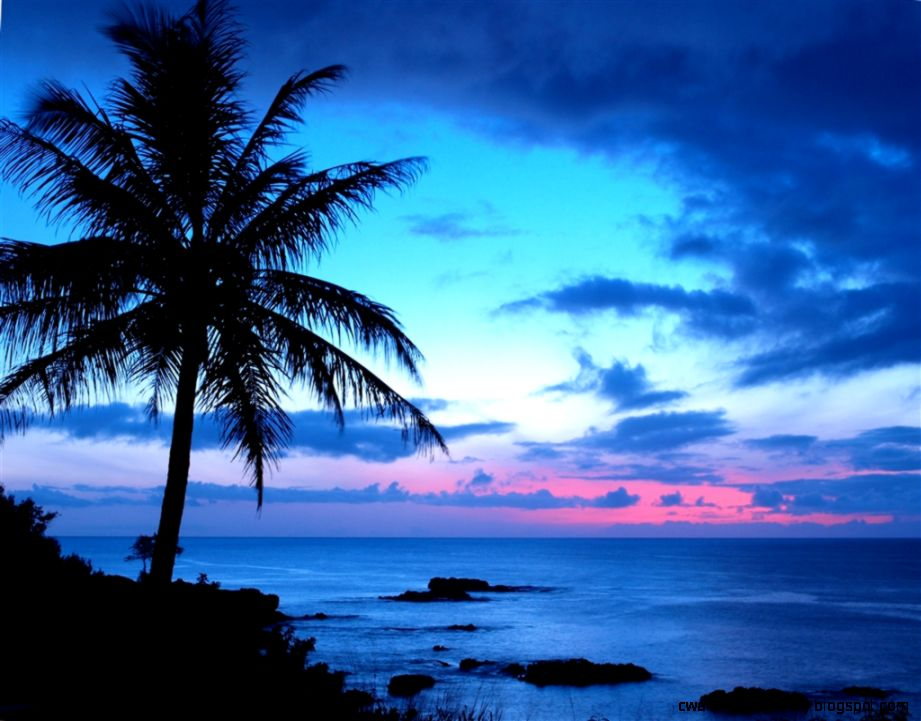 Sunsets Palm trees and Ocean on Pinterest