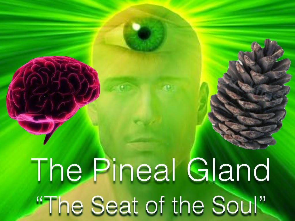 The pineal gland. Secrets of the third eye 30