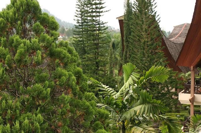 Celebes Sulawesi
