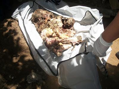 Moradores de Garanhuns dizem ter comido empadas com carne humana