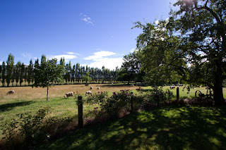 The paddocks around Naylors House