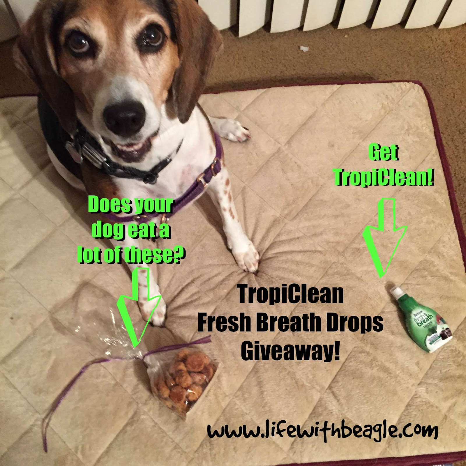 Beagle get your dog s breath tropicleanfresh breath drops giveaway