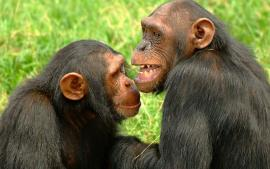 http://freshsnews.blogspot.com/2015/09/6panourgoi-chimpatzides-katarriptoun-drone-vinteo.html