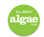 ALL ABOUT ALGAE