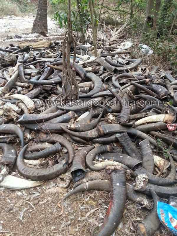 Animal Waste, Mogral Puthur, Kasaragod, Kerala, Buffalo, Road Side, Complaint.