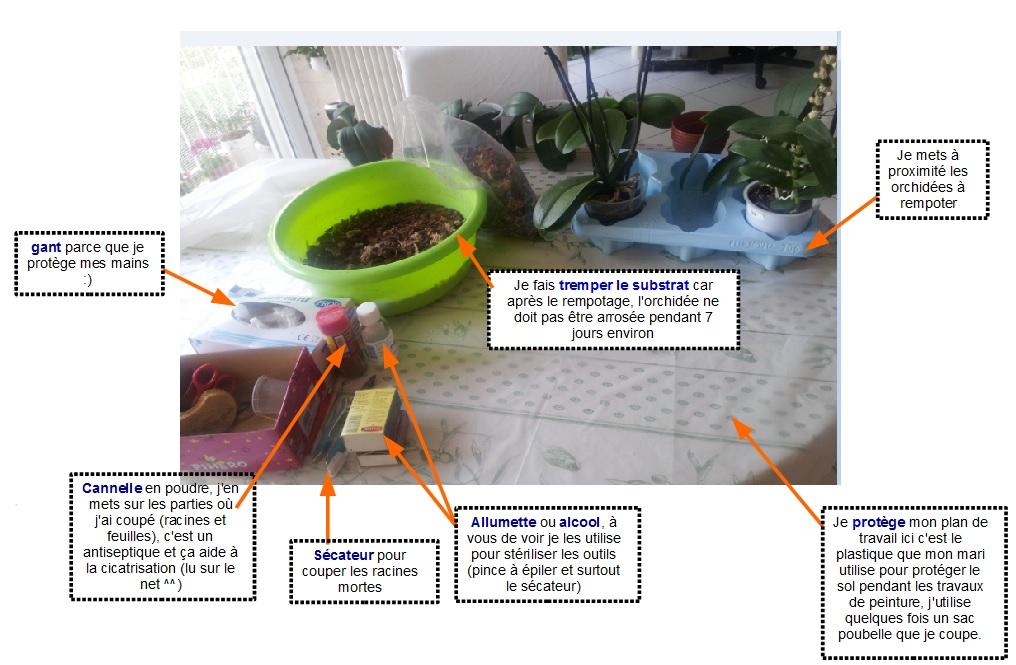 sos orchid es comment rempoter une orchid e. Black Bedroom Furniture Sets. Home Design Ideas