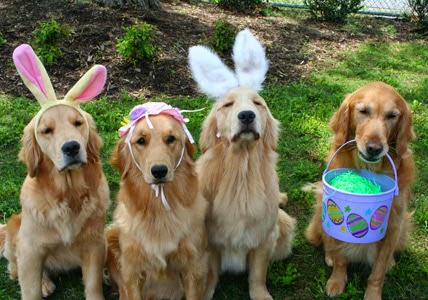 dogs wearing bunny ears