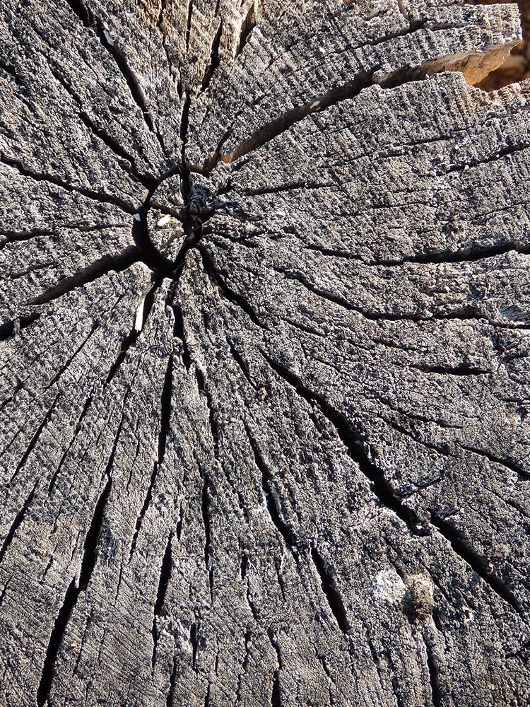 пенек, дерево, кора