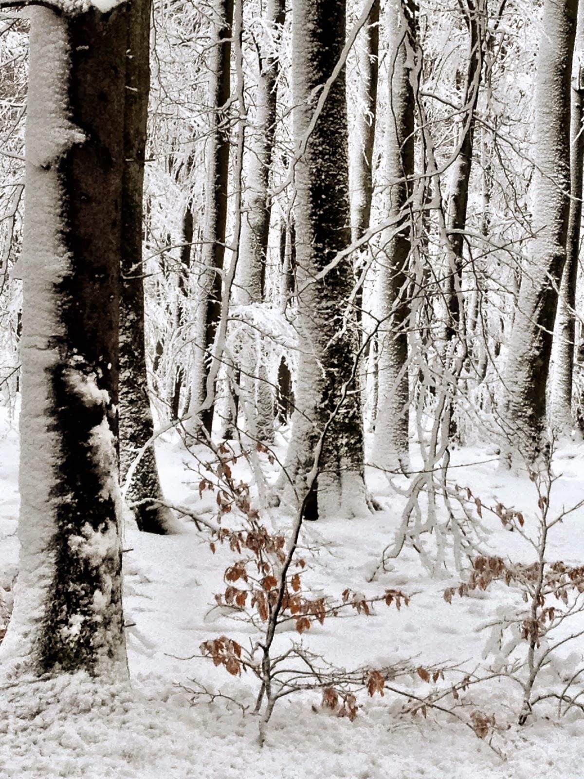 Villa Natura ekologiskt lågenergihus Österlen Skåne vinter