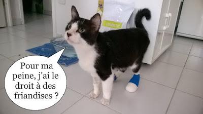 Chat noir et blanc avec des chaussons aux pattes.