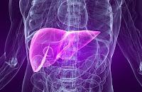 erboristeria fitoterapia problemi fegato