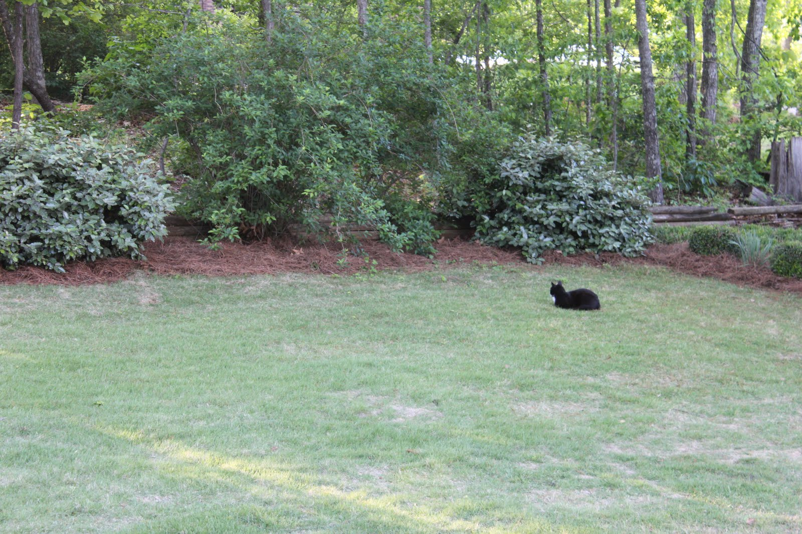musings of a middle aged mom what is in our backyard