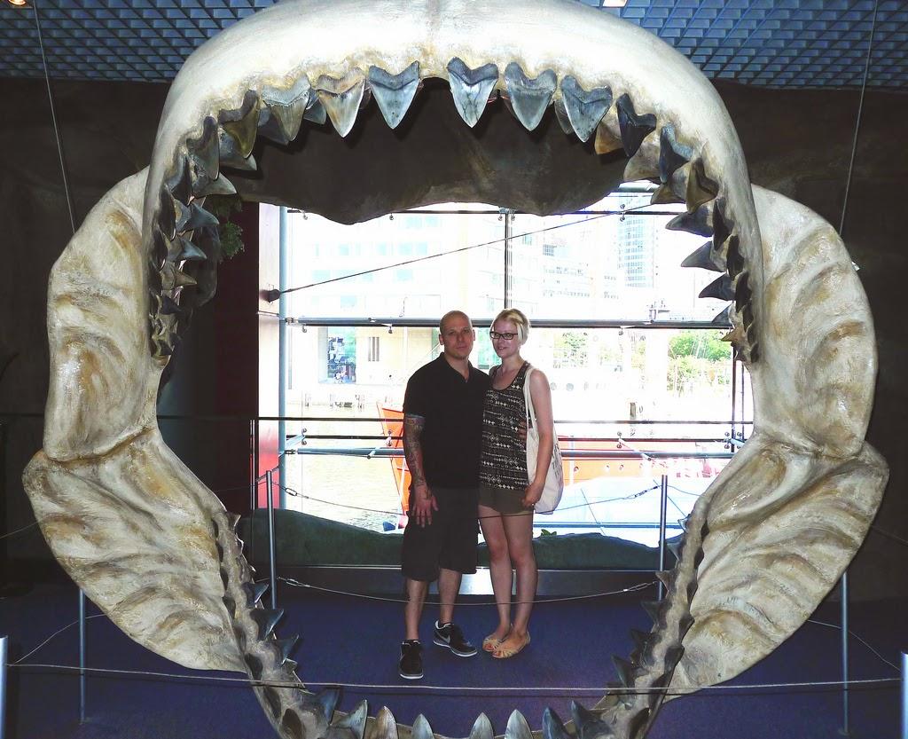 squalo più grande megalodonte