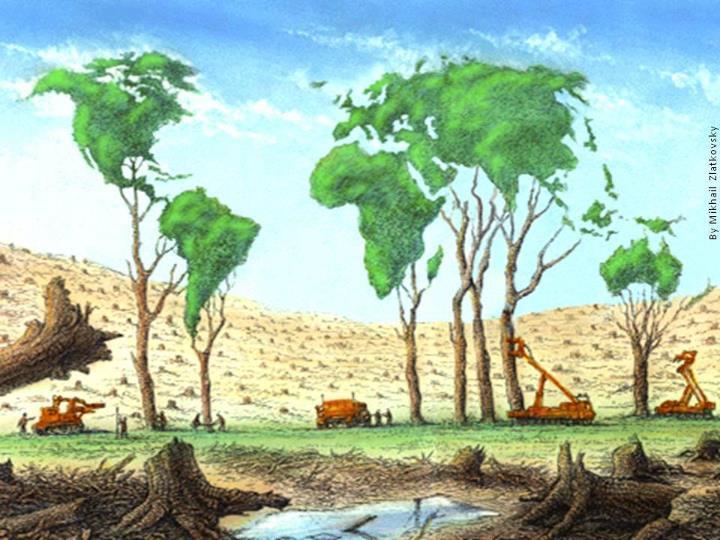 Deforestación Ambiental