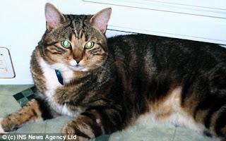 Lex, kucing yang berhasil melarikan diri beberapa saat sebelum dikebiri
