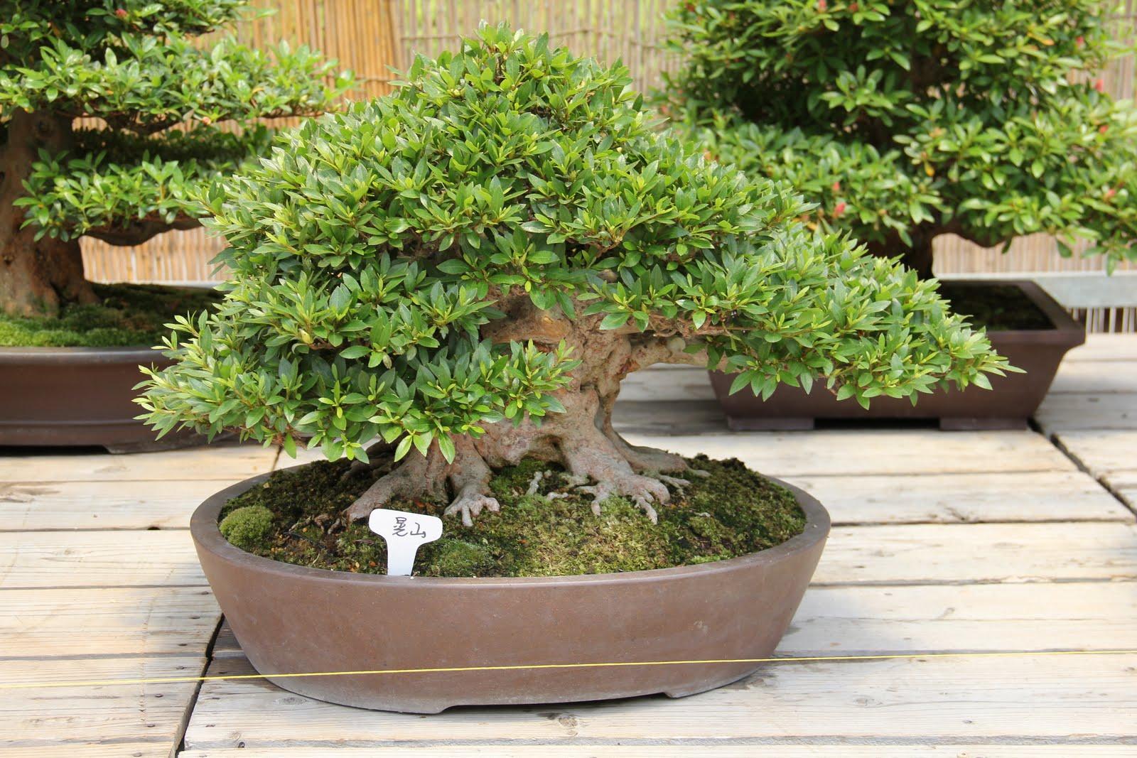 Fotos de jardines pequeos arboles bonsai bonsai auto for Arboles de jardin fotos