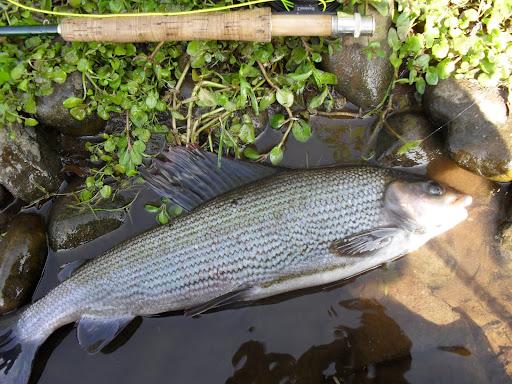 Cumbrian Angler
