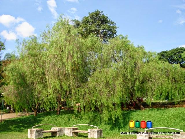 fotos jardim botanico belo horizonte Jardim Botânico da Fundação
