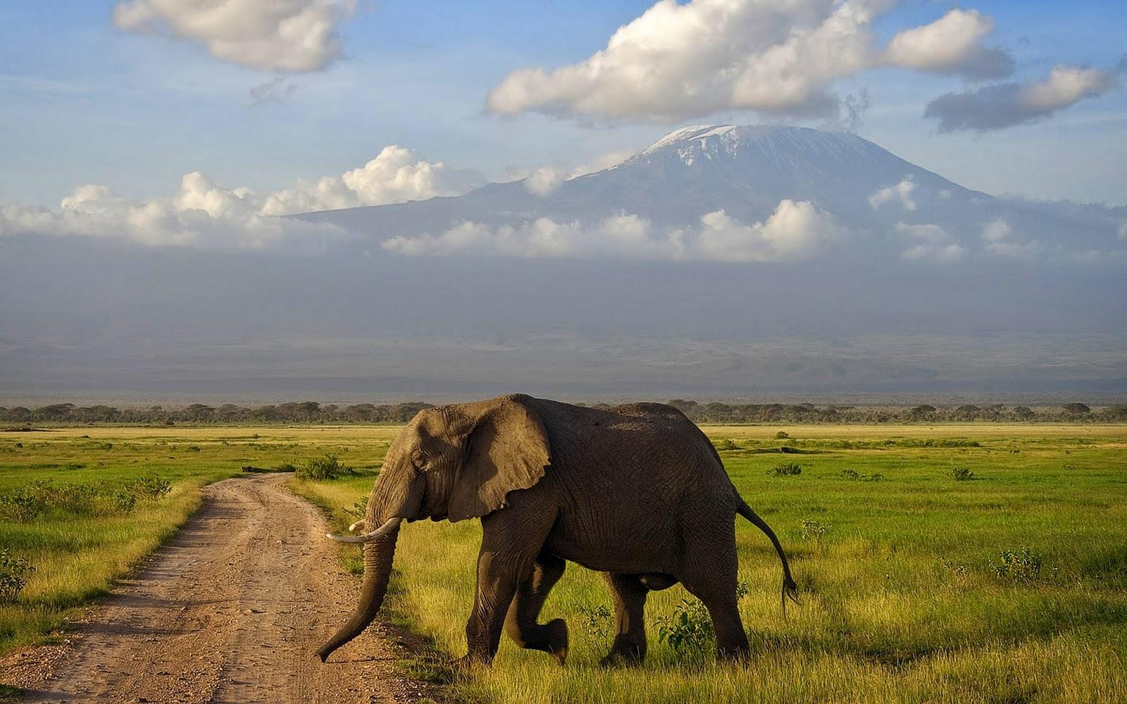olifanten achtergronden bureaublad - photo #2