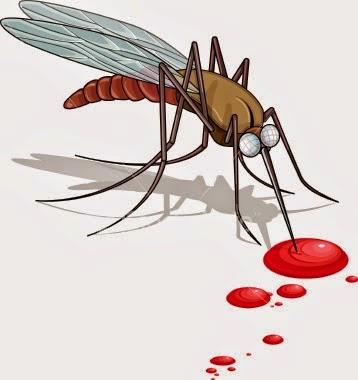 Cara Menjaga Ruangan Dari Nyamuk