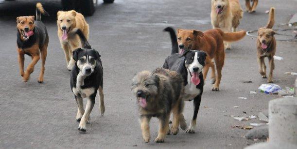 MS vacunará perros y gatos contra la rabia humana