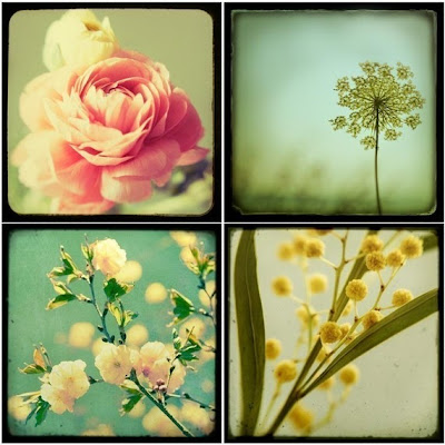flowers, flower photography