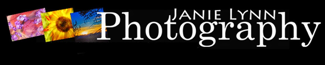 Janie Lynn Photography