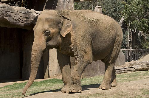 All hd wallpapers wild animals pictures and photos - Elephant assis ...