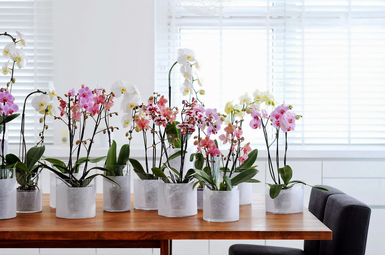 Decoraci n f cil flores para julio phalaenopsis for Decoracion 9 de julio