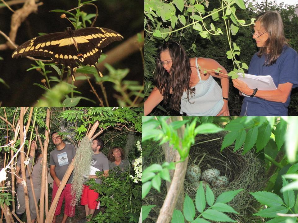 La biodiversidad al alcance de todos comunicaci n ambiental for Vivero plantas nativas