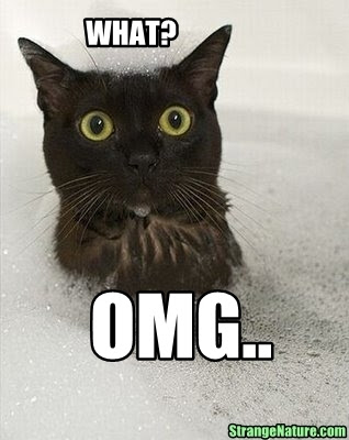 omg funny animals cat 1