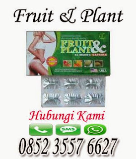Fruit Plant Pelangsing Herbal