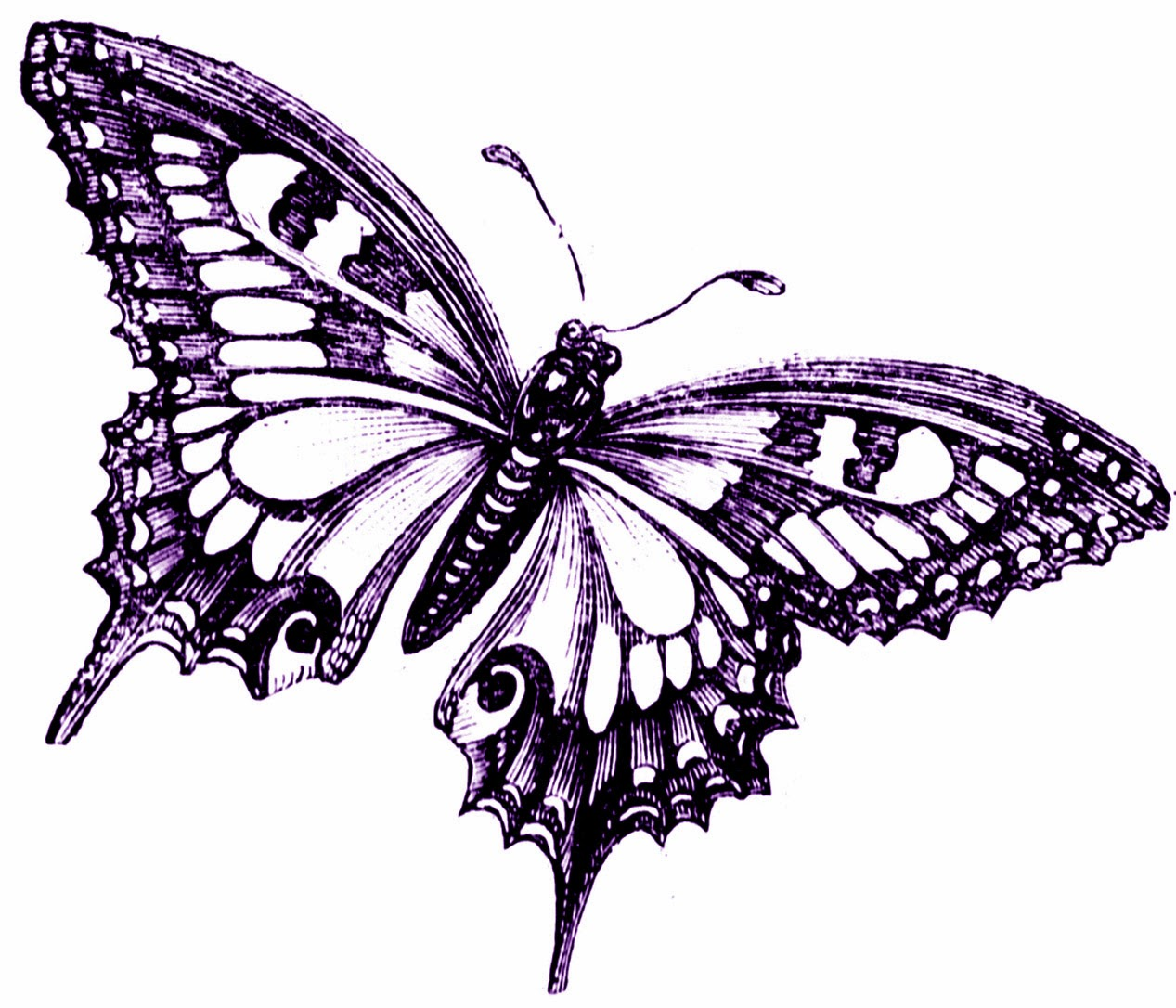 Critical image in printable butterfly