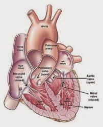 Cara Cepat Menyembuhkan Penyakit Jantung Rematik