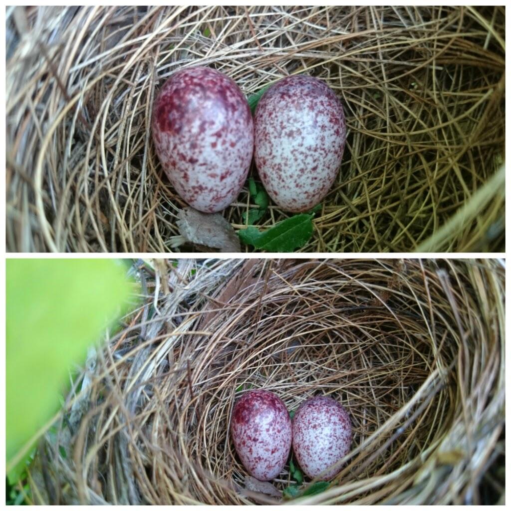 Selamatkan telur burung